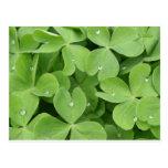 Grünes Kleeblattklee-Blätter Postkarten