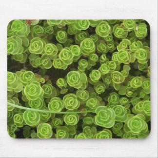 Grünes Sedum Mousepad 2