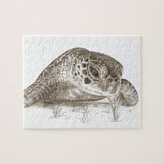 Grünes Seeschildkröte-Zeichnen