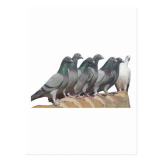 Gruppe der Brieftauben Postkarte