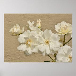Gruppe der weißen Rosen Poster