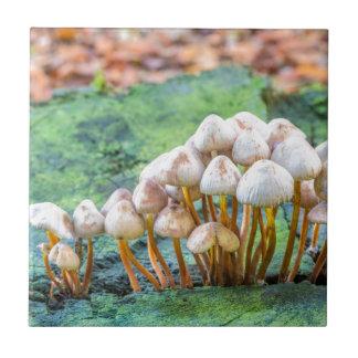 Gruppe Pilze auf grünem Baumstumpf Kleine Quadratische Fliese