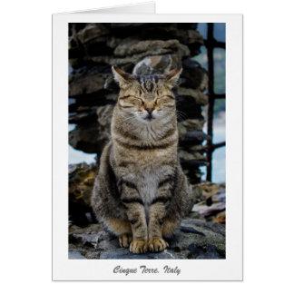 Gruß-Karte - entspannte Katze in Cinque Terre, Grußkarte