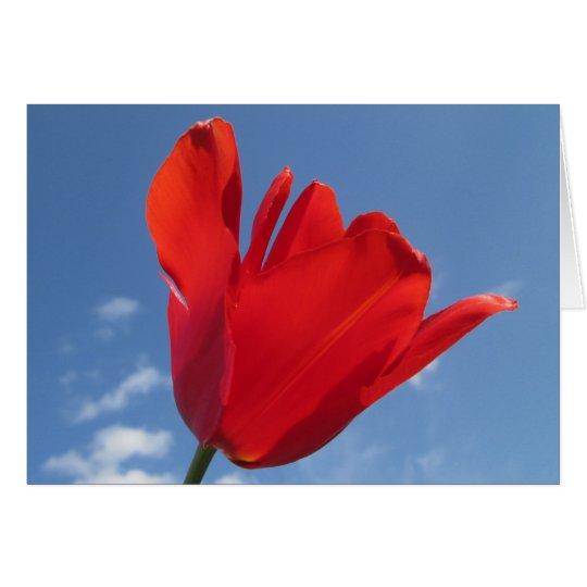 Gruß-Karte - rote Tulpe-blauer Himmel Grußkarte