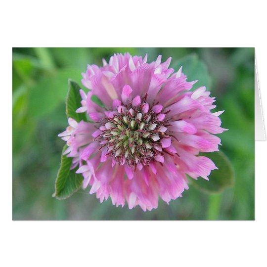 Grusskarte aussergewöhnliche,rosa Kleeblüte,blanko Karte
