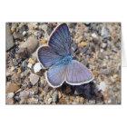 Grusskarte blauer Schmetterling: Bläuling,blanko Karte