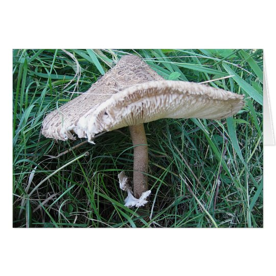 Grusskarte grosser Pilz mit hübschem Hut, blanko Karte