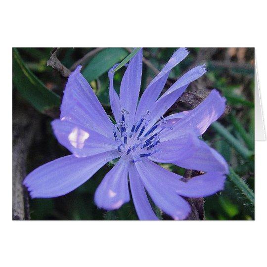 Grusskarte hübsche blaue Wildblume, blanko Karte