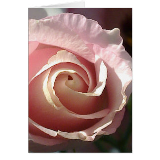 Grusskarte hübsche rosa Rose Karte