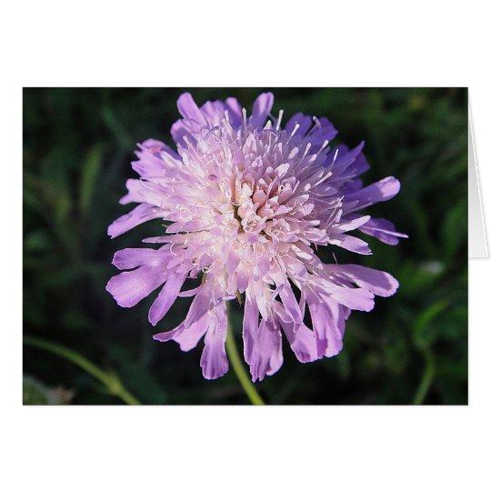 Grusskarte lila Scabiosa, blanko, gestaltbar Karte