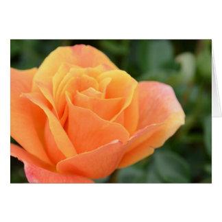Grußkarte, löschen, mit orange Rose Mitteilungskarte