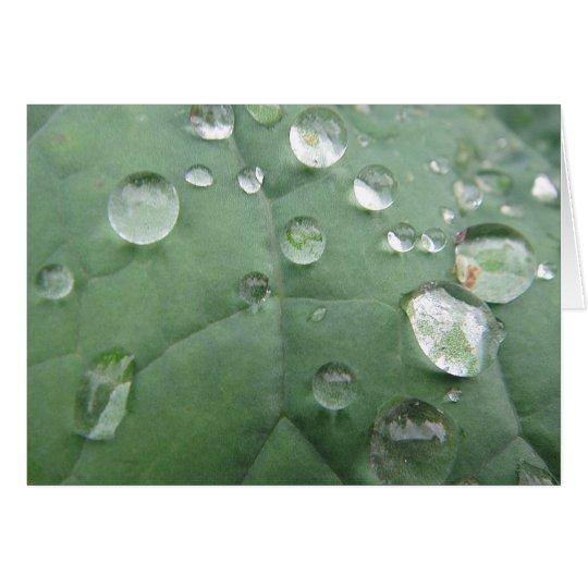 Grusskarte Wassertropfen auf graugrünem Blatt Karte