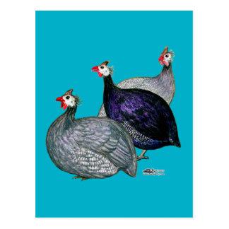 Guinea drei postkarte