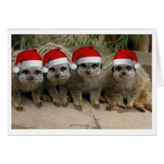 Haben Sie ein Meerkat Weihnachten! Grußkarte