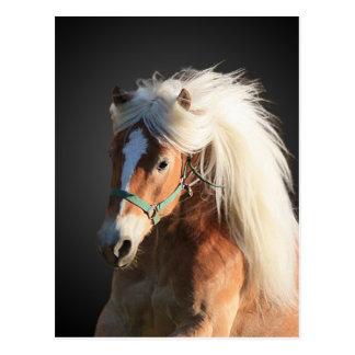 Haflinger Pferd mit der schönen Mähne Postkarte