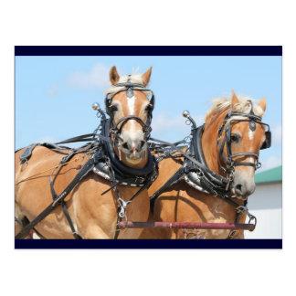 Haflinger Pferde Postkarte