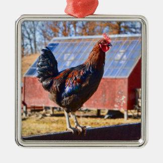 Hahn im Barnyard Quadratisches Silberfarbenes Ornament
