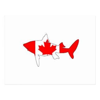 Haifisch Kanada Postkarte