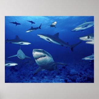 Haifisch-Terror vom tiefen Poster