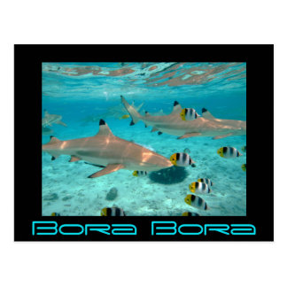 Haifische in der Bora Bora Lagune schwärzen Postkarte