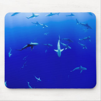 Haifische Unterwasser Mauspad