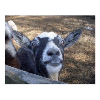 Hallo freundliche Ziege Postkarte