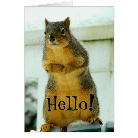 Hallo vom Eichhörnchen Mitteilungskarte