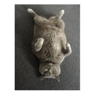 Hallo von Fiona die große blaue Katze! Postkarte