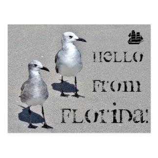Hallo von Florida! Miami-Seemöwe Postkarte