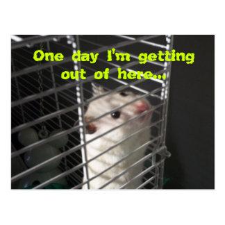 Hamster-Entweichen-Postkarte Postkarte