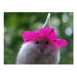 Hamster mignon drôle cartes postales