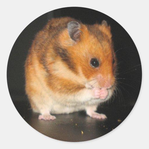 Hamsteraufkleber Runder Aufkleber