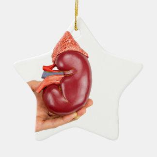 Hand, die Nierenmodell auf weißem Hintergrund hält Keramik Ornament