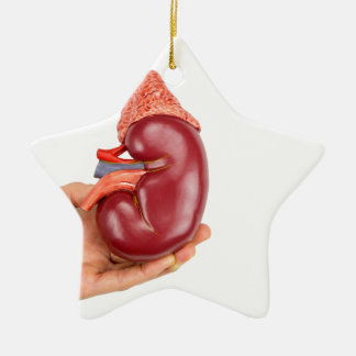Hand, die Nierenmodell auf weißem Hintergrund hält Keramik Stern-Ornament