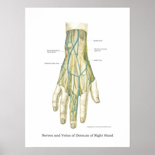 Hand-u. Handgelenk-internes Anatomie-Plakat Poster | Zazzle.ch