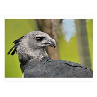 Harpy Eagle 1.JPG Postkarte