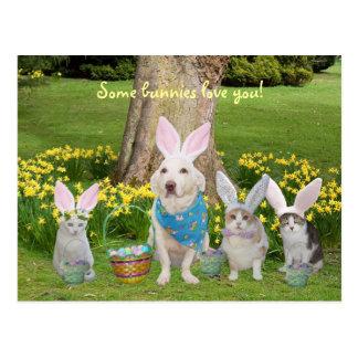 Häschen-Hund mit Häschen-Katzen Postkarte