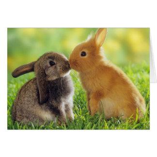 Häschen-Kuss Grußkarte