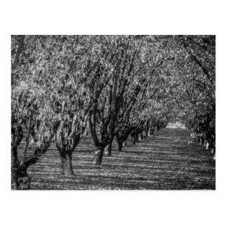 Haselnuss-Bauernhof im Britisch-Columbia Postkarte
