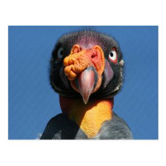 Hässliche Vogel-Postkarte König-Geier Postkarte