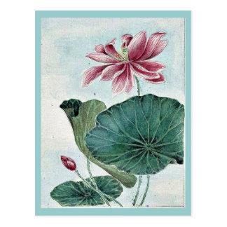 Hasu - Lotos/durch Megata Morikaga Ukiyo-e. Postkarte