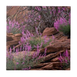 Hauptstadts-Riff-Nationalpark, Utah, USA Keramikfliese