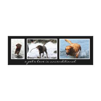 Haustier-Montage für drei Bilder Leinwanddruck