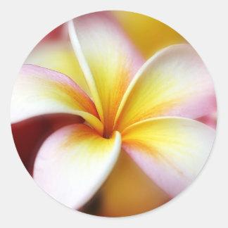 Hawaïen blanc de fleur d'Hawaï de Frangipani de Sticker Rond