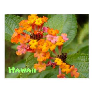 Hawaii-Blume Postkarte