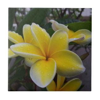 Hawaiiplumeria-Blumen Kleine Quadratische Fliese