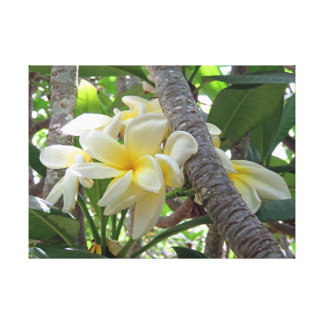 Hawaiischer Plumeria Leinwanddruck