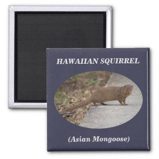 Hawaiischer quadratischer Magnet des