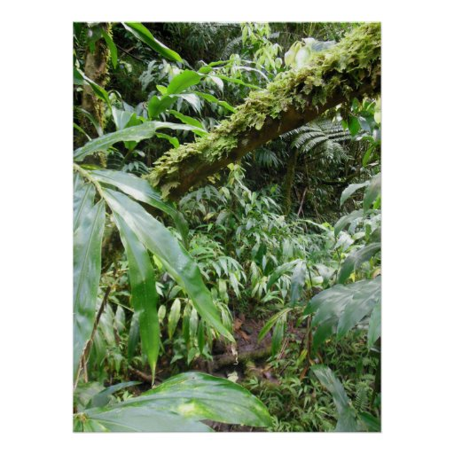 Hawaiischer Regen-Wald Posterdruck