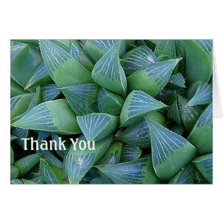 Haworthia saftige Pflanzen danken Ihnen zu Karte
